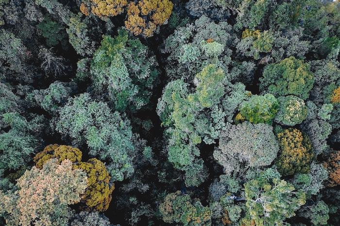 Biomasa en instalaciones térmicas